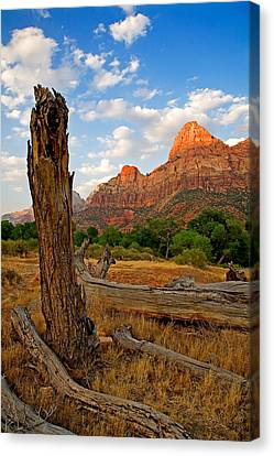 Stumped At Zion Canvas Print by Peter Tellone