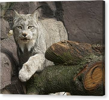 Canvas Print featuring the photograph Stunning by Cheri McEachin