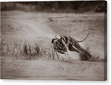 Sturdy And Powerful Canvas Print