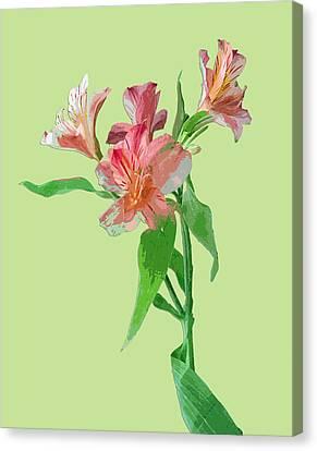 Stylish Florals Canvas Print by Karen Nicholson