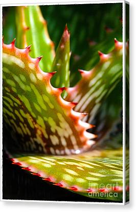 Succulents With Spines Canvas Print by Judi Bagwell
