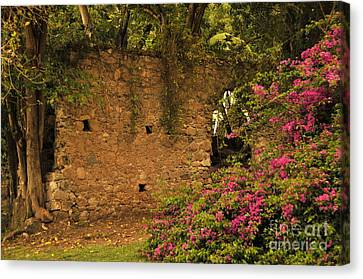 Sugar Mill Of The Past In St. Lucia Canvas Print by Cindy Lee Longhini