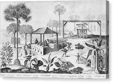 Sugar Production In The West Indies Canvas Print by Everett