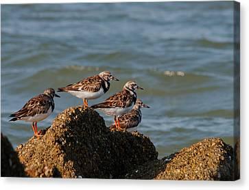Sullivan's Island Shore Birds Canvas Print