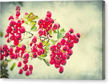 Summer Berries Canvas Print by Angela Doelling AD DESIGN Photo and PhotoArt