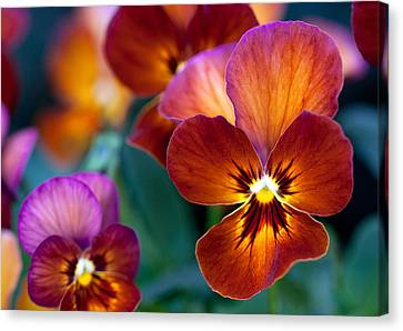 Canvas Print featuring the photograph Summer Colors by Anna Rumiantseva