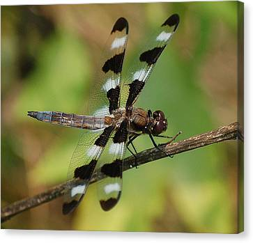 Summer Dragonfly Canvas Print