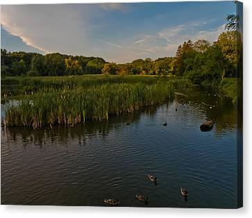 Summer Duck Pond Canvas Print by Jiayin Ma
