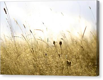 Summer Field Canvas Print by Emanuel Tanjala