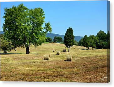 Summer Field Canvas Print by Paul Mashburn