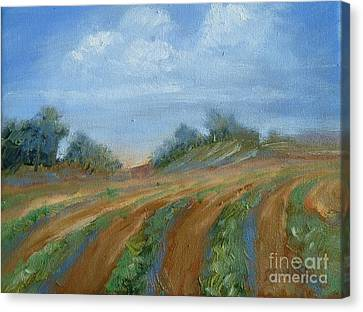 Canvas Print featuring the painting Summer Fields by Sally Simon