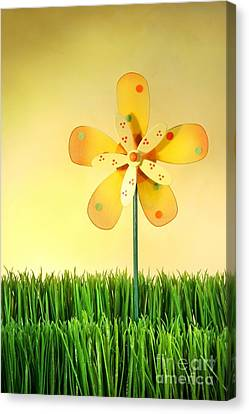 Summer Fun In The Grass Canvas Print by Sandra Cunningham