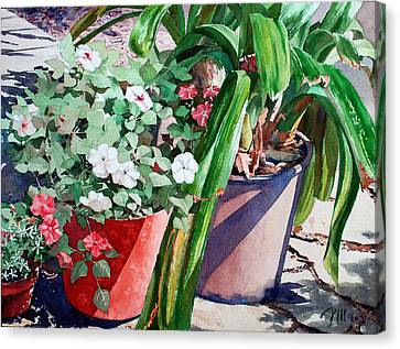 Summer Impatiens Canvas Print by Peter Sit