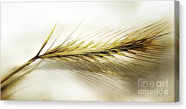 Summer In Ocher Canvas Print by Artist and Photographer Laura Wrede