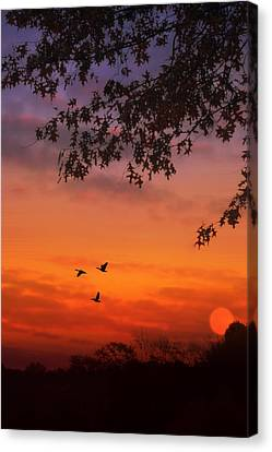 Summer Side Of Life Canvas Print by Tom York Images
