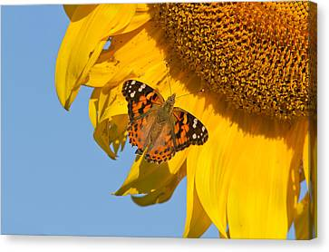 Eating Entomology Canvas Print - Summer Time by Mircea Costina Photography