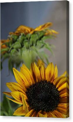 Two Suns Canvas Print - Summer's End by Odd Jeppesen