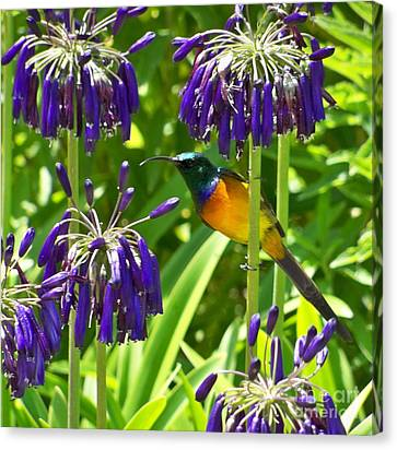 Canvas Print featuring the photograph Sun Bird by Lynn Bolt
