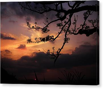Sun Caught By Branches  Canvas Print by Rosvin Des Bouillons