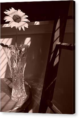 Canvas Print featuring the photograph Sun In The Shadows by Lynnette Johns