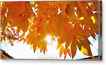 Sun Kissed  Deciduous Canvas Print by Danielle  Parent
