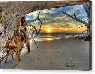 Sun Setting Under The Tree Canvas Print by Sean Allen