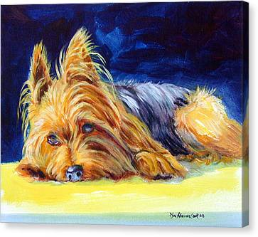 Sun Spot Yorkshire Terrier Canvas Print