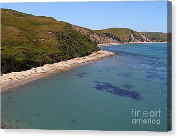Sunbathing Elephant Seals Along A Beach At Point Reyes California . 7d16058 Canvas Print by Wingsdomain Art and Photography