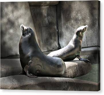 Canvas Print featuring the photograph Sunbathing Seals by Mary Almond
