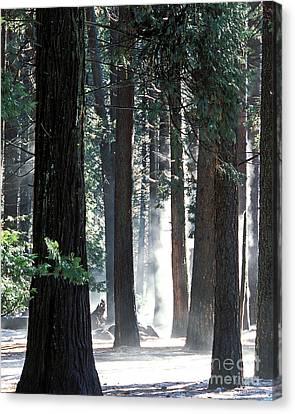Sunbeams Through The Trees Yosemite National Park Color Canvas Print