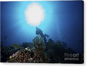 Sea Fern Canvas Print - Sunburst Above A Diver Amongst by Terry Moore