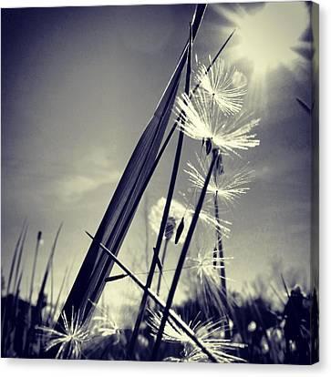 Suncatcher - Instagram Photo Canvas Print