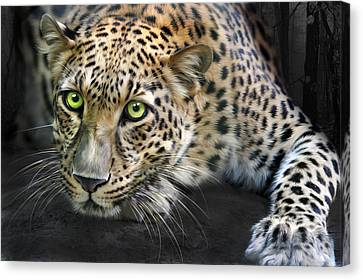 Sundari Canvas Print by Big Cat Rescue