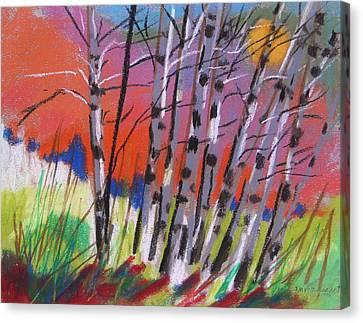 Sundown White Birches Canvas Print by John Williams