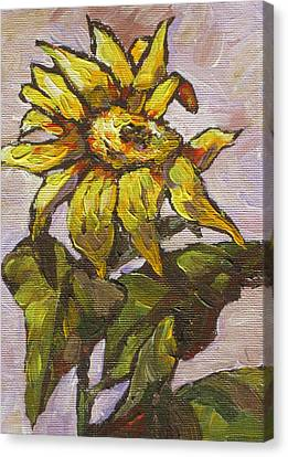 Sunflower 5 Canvas Print by Sandy Tracey