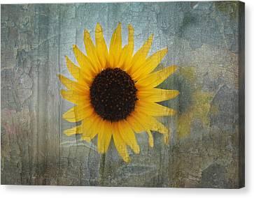 Sunflower Burst Canvas Print by Lisa Moore