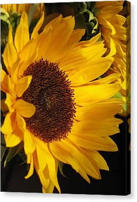 Canvas Print featuring the photograph Sunflower--dappled Light by Vikki Bouffard