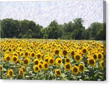 Canvas Print featuring the photograph Sunflower Field by Donna  Smith