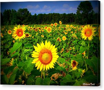 Sunflower Field Canvas Print by Melessia  Todd