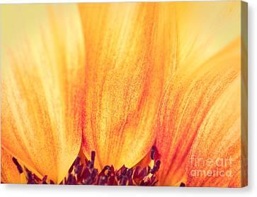 Sunflower II Canvas Print by Silvia Ganora