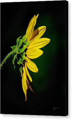 Canvas Print featuring the photograph Sunflower In Profile by Vicki Pelham