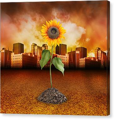 Sunflower In Red City Canvas Print by Angela Waye