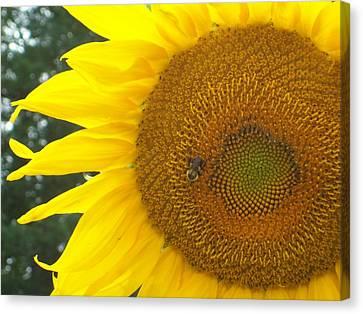 Canvas Print featuring the photograph Sunflower by Lou Ann Bagnall