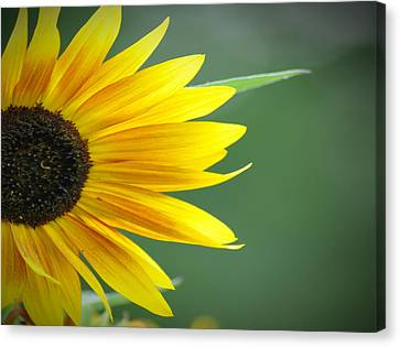 Sunflower Morning Canvas Print by Bill Cannon