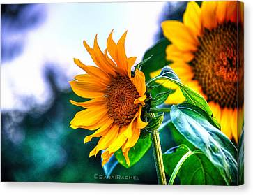 Sunflower Smile Canvas Print by Sarai Rachel