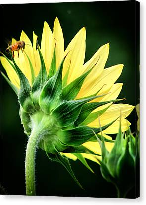 Canvas Print featuring the photograph Sunflower With Bee by Lynne Jenkins