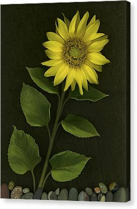 Sunflower With Rocks Canvas Print by Deddeda