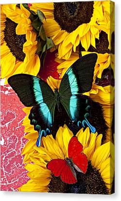 Sunflowers And Butterflies Canvas Print by Garry Gay