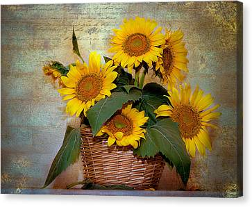 Canvas Print featuring the photograph Sunflowers by Anna Rumiantseva