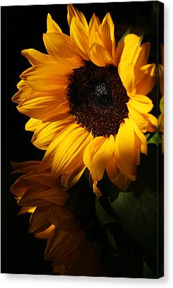 Sunflowers Canvas Print by Dorothy Cunningham